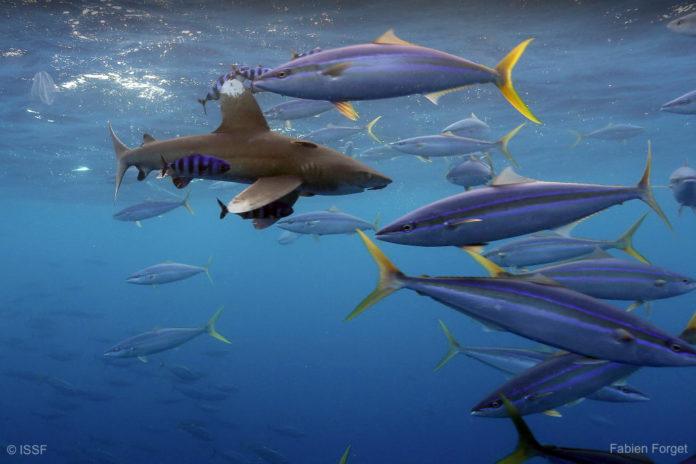 Sharksafe