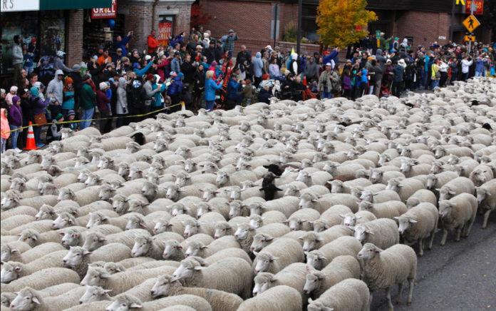 Trailing of the Sheep (Ketchum, Idaho)